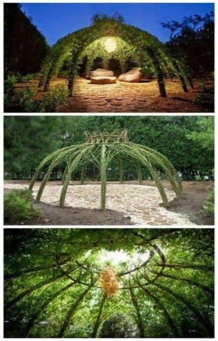 פרגולות מעוצבות להשראה, עץ ועצה