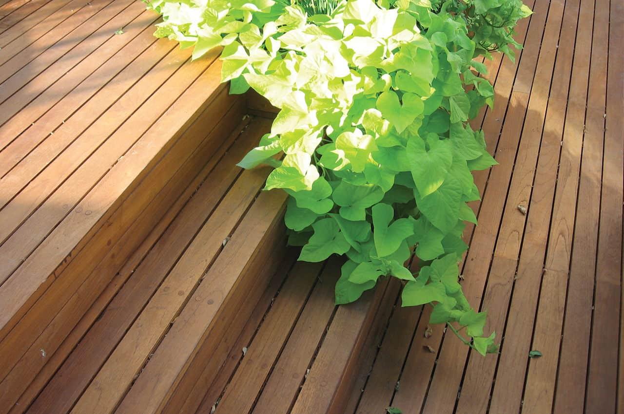 חיפוי מדרגות לדק עץ טיק