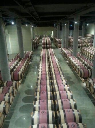 סיפור על עץ ויין ביקב קסטל