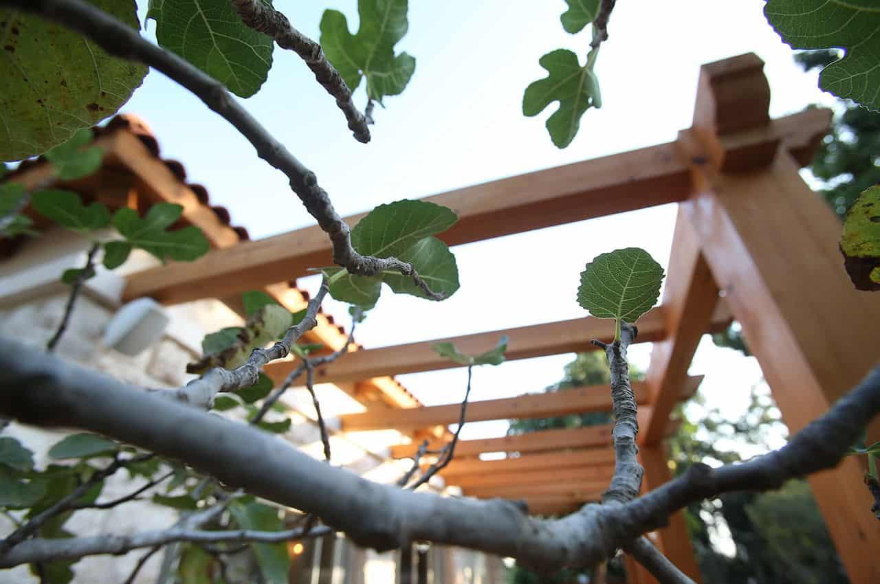 פרגולה תלויה מעץ המלוק